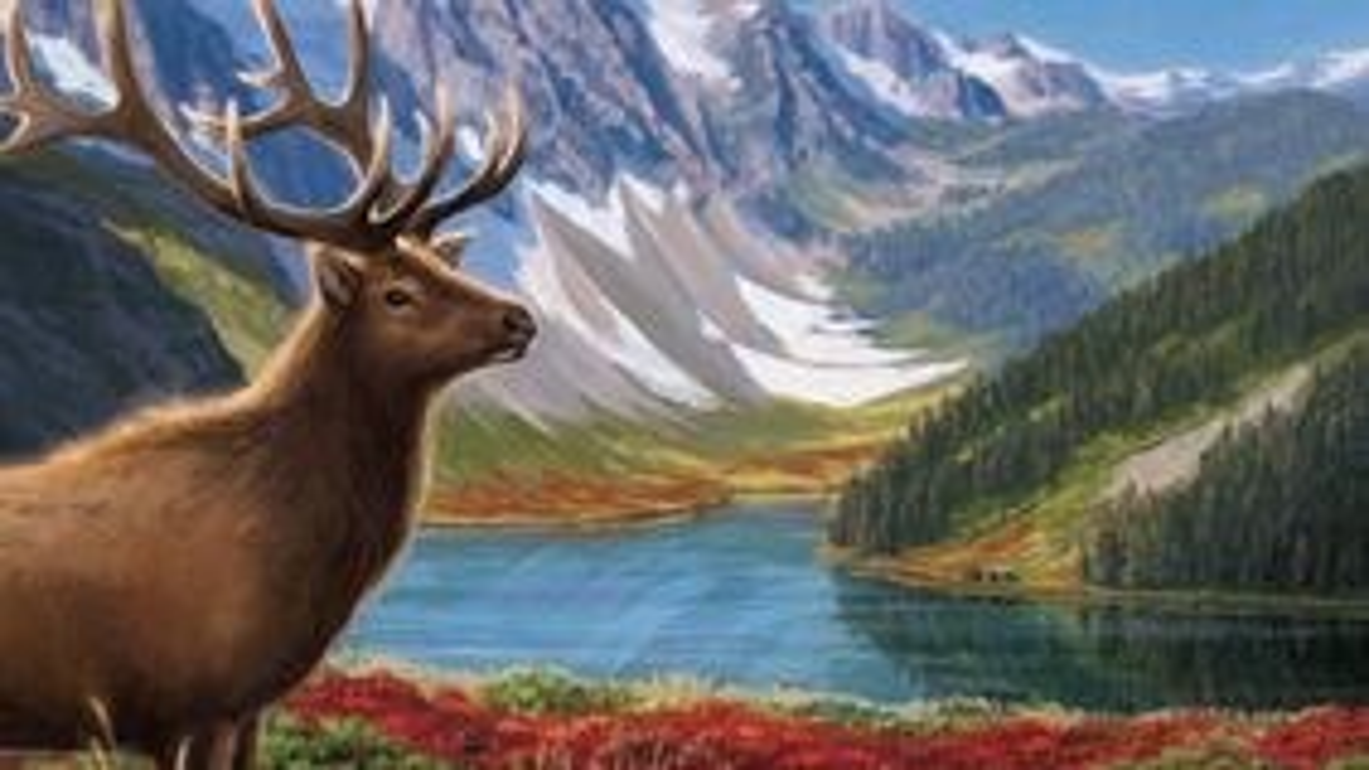 Cascadia board game artwork