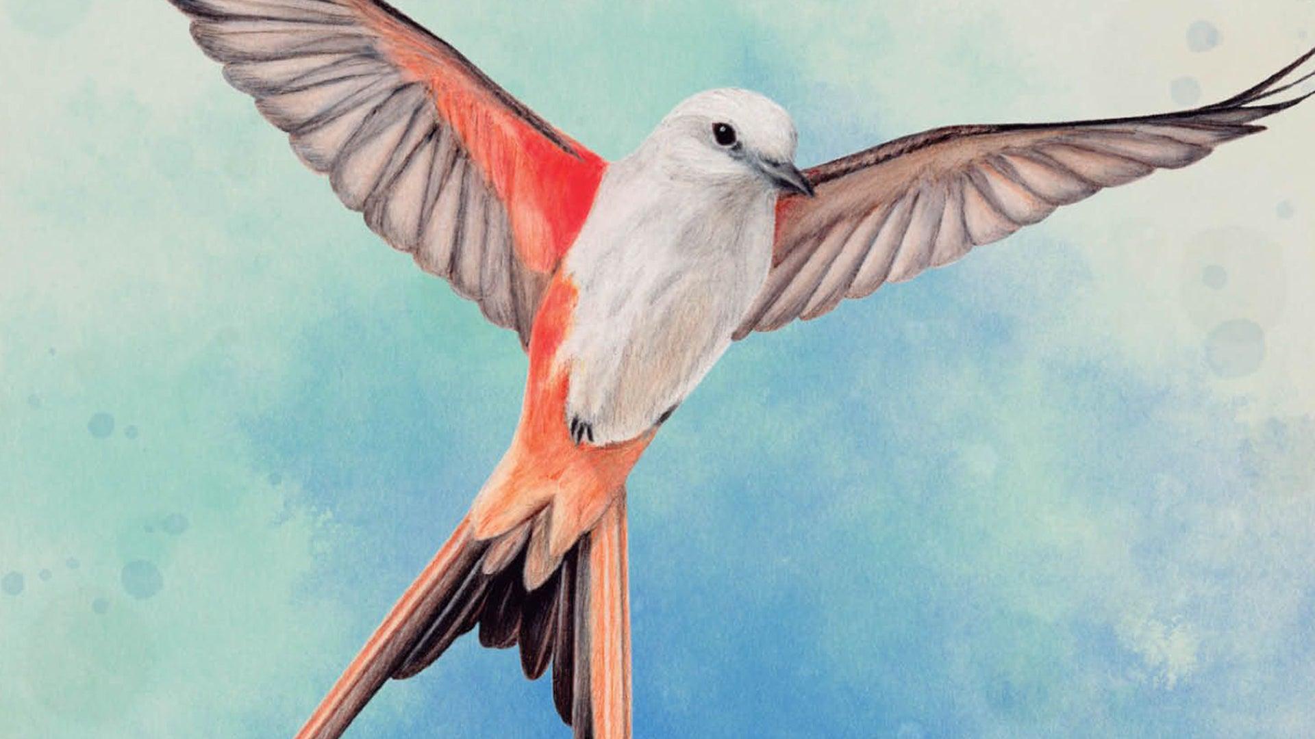 Wingspan board game artwork